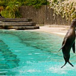 blackpool-zoo-wild-5