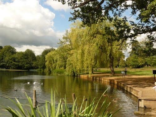 Reigate Priory Park 10km