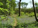 woodland-woggle