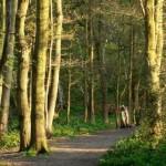wimbledon-common