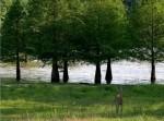 lake-barkley-state-resort-park-race