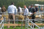 hesket-newmarket-agricultural-show-cumbria