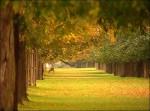 Bushy_Park_10km