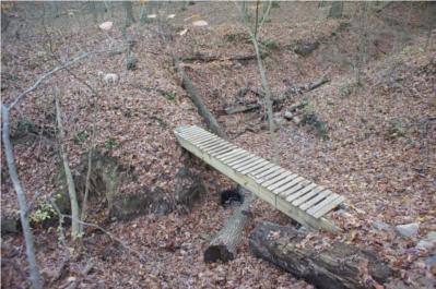 Forest Glen Trail Run