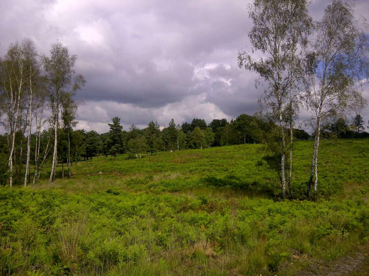 Foxbury 10km