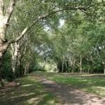 bishops-park-fulham-10k