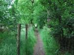 toast-track-wimbledon-common