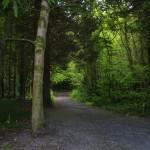 7-woods-trail