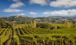 Run The Wine Country!
