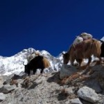 Climb 2 Cure Everest Base Camp Info Session - August 15