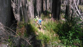 Willamette Headwaters Endurance Events (WHEE Run)