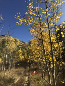 Deep Creek Trail Half Marathon